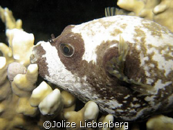Although wary of giving sleeping fish arch eyes, I just h... by Jolize Liebenberg 